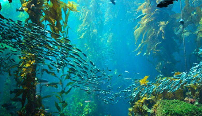 sea harvest fish